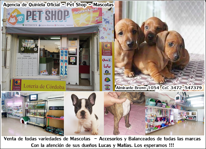 ESPACIO PUBLICITARIO: PET SHOP