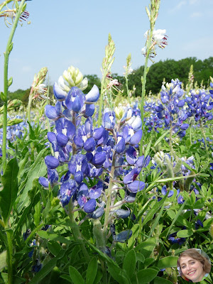 A Touch of Texas: bluebonnet paintings