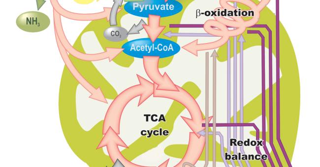 Concepto de metabolismo: catabolismo y anabolismo..