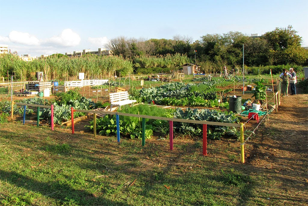 Urban vegetable gardens, via Goito, Livorno