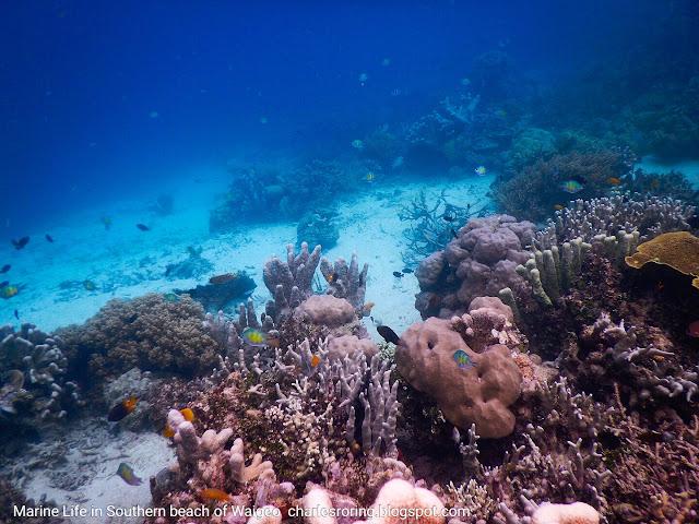 Marine life at drop off reef of Waigeo island
