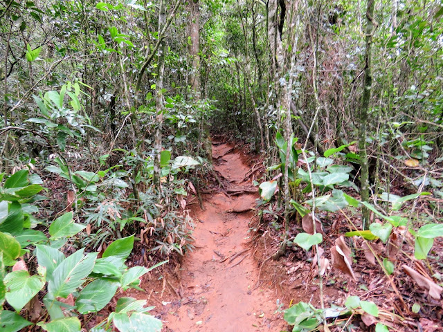 Trail to Pedra Bonita in Tijuca National Forest in Rio de Janeiro Brazil