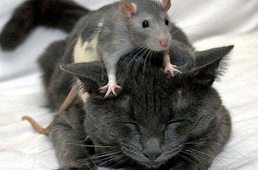 Stray Cats Keep Rats Away