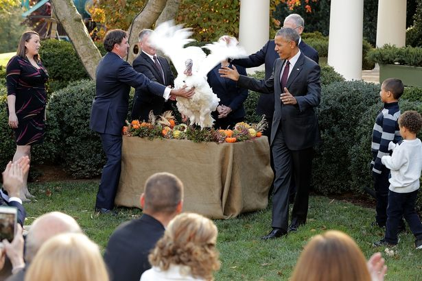 US-President-Barack-Obama-attends-the-pardoning-of-National-Thanksgiving-turkey-accompanied-his-ne