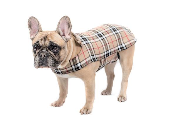 funky dog motýlky pro psy