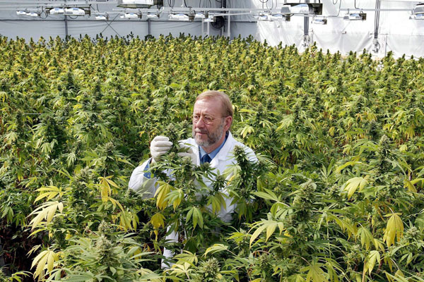 Universidad de Michigan abre la primera carrera especializada en marihuana