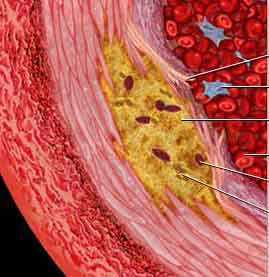 lo que dice la ciencia para adelgazar colesterol