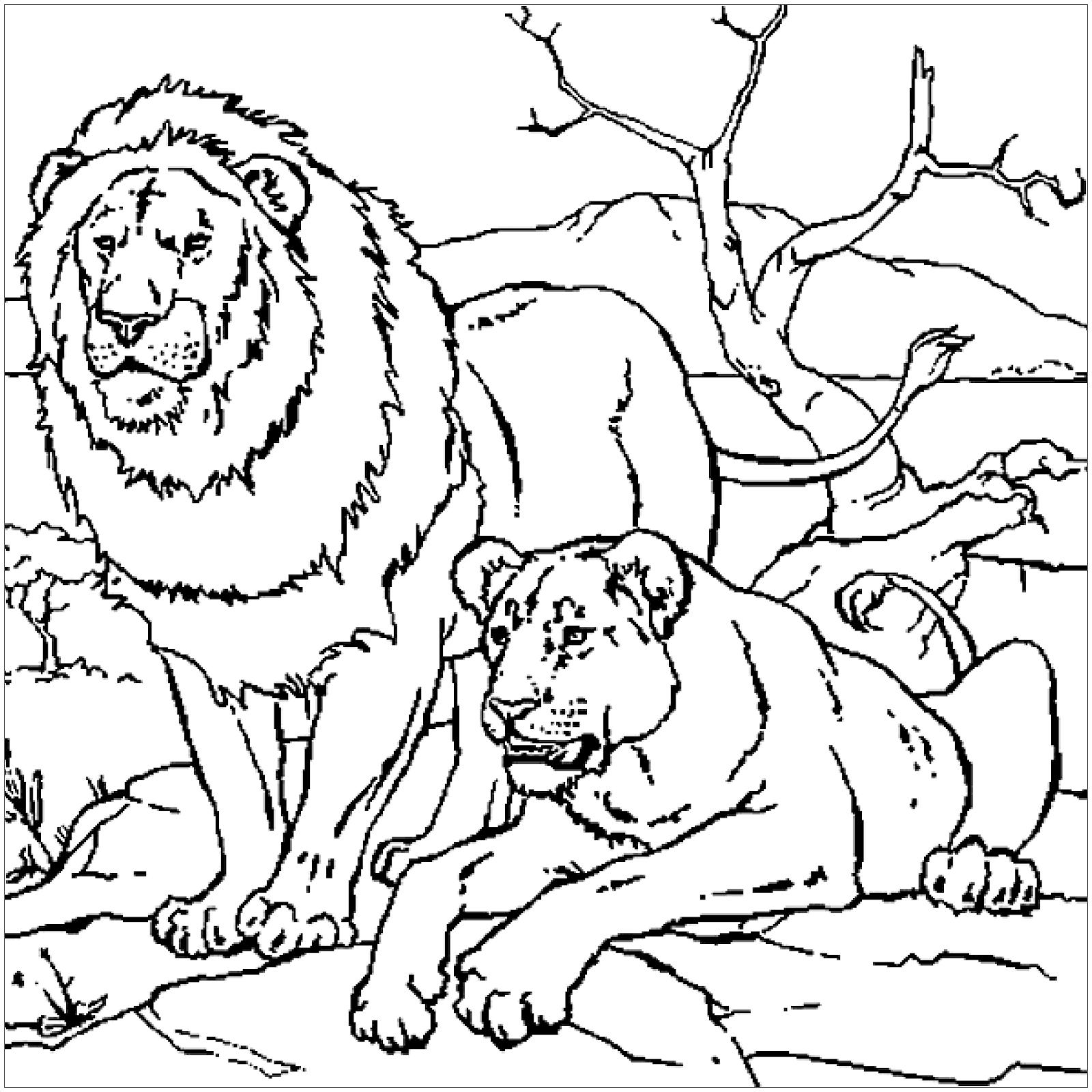 Tranh tô màu hai con sư tử