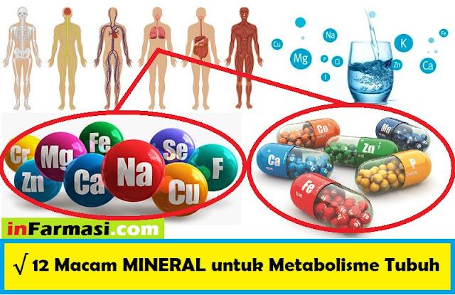 mineral dalam tubuh