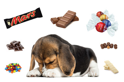 Sad dog with chocolate