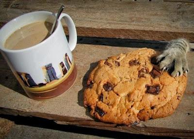 divertida foto de animalito ladron robando galletas