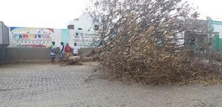 Ventania derruba árvore no Centro de Nova Palmeira