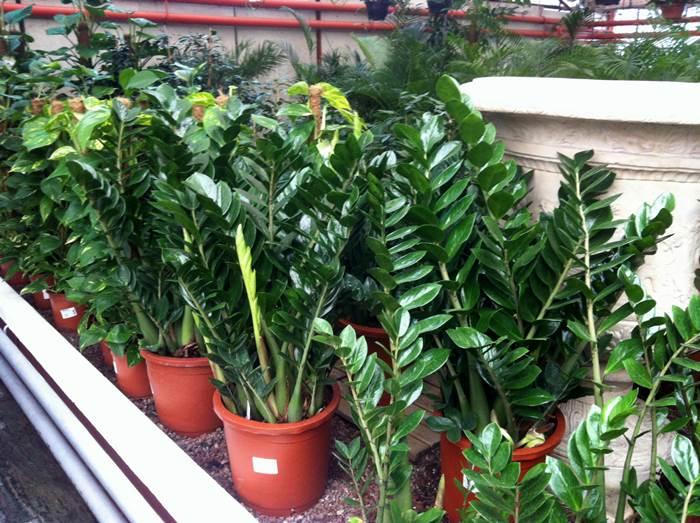 Descubriendo hojas plantas de interior en los pe otes for Viveros plantas de interior