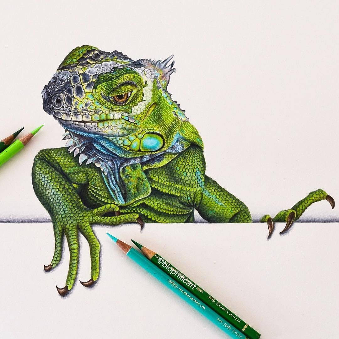 12-Iguana-Sallyann-Brightly-Colored-Animal-Pencil-Drawings-www-designstack-co