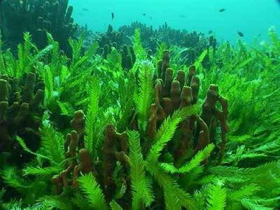 Tác dụng phụ của tảo mặt trời spirulina là gì?