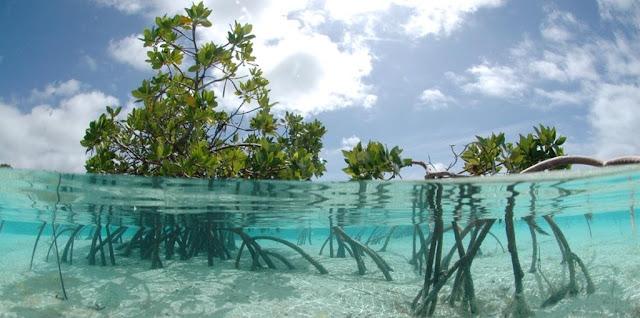Soal Geografi : Jenis Vegetasi Alam dan Ekosistem Pantai/Pesisir