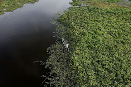 Excessive sedimentation and deforestation are endangering three great lakes in East Kalimantan