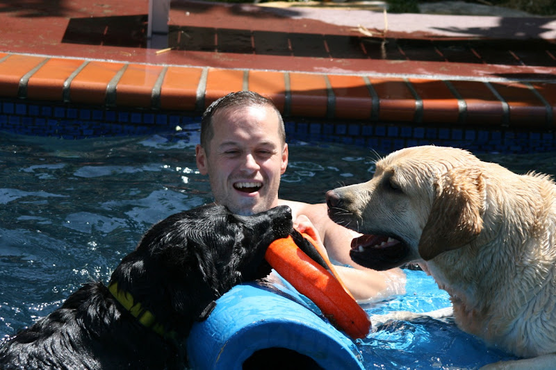 Labrador pool play