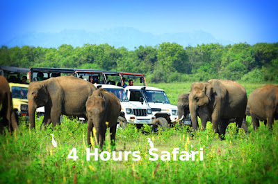 4 Hours Safari in Udawalawe National Park
