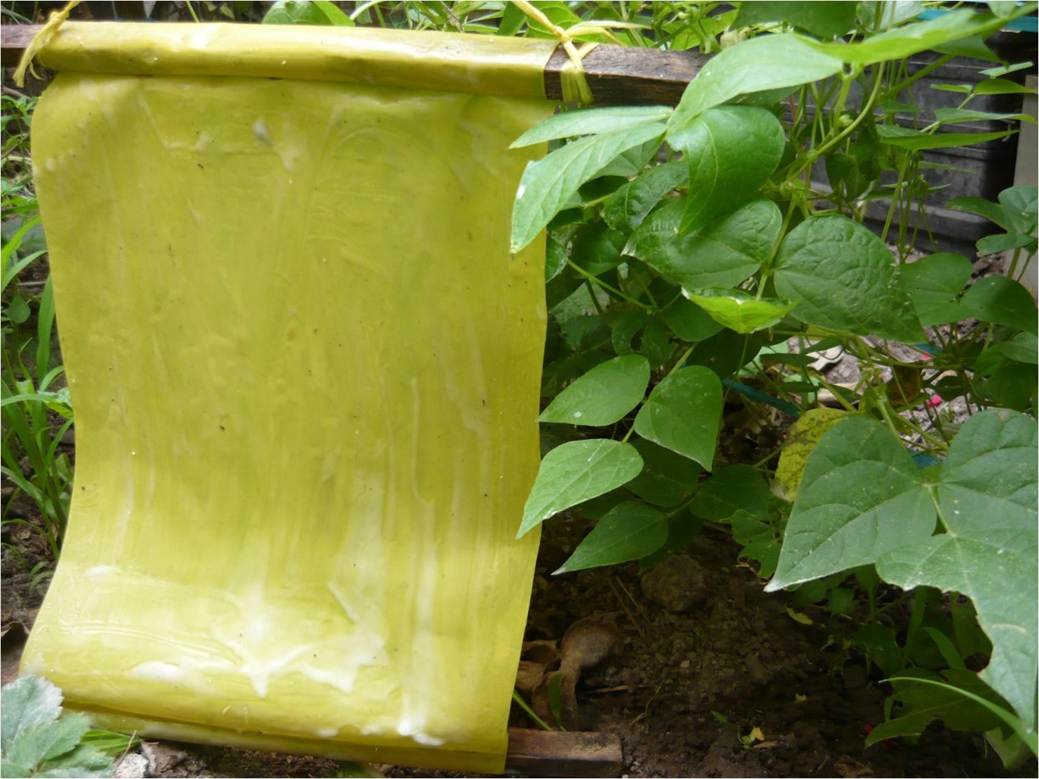 Alternativa ecol gica las trampas amarillas - Trampas para ratones de campo ...