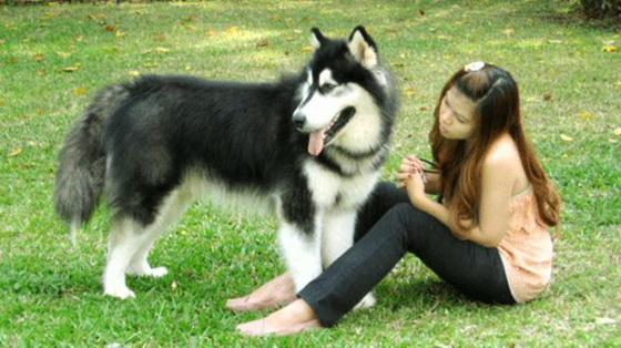 Probably Siberian Husky Or Malamute X Reply 9 Democratic