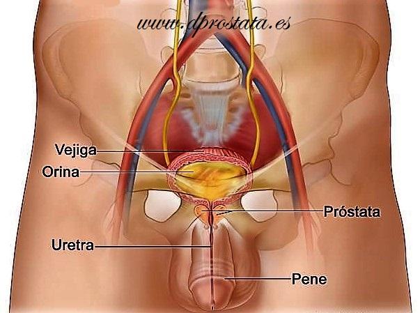 causas y factores de riesgo de prostatitis