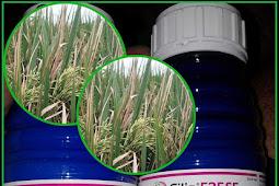 Review Fungisida Filia 525 SE Serta Menentukan Dosis Filia Untuk Padi Yang Akurat