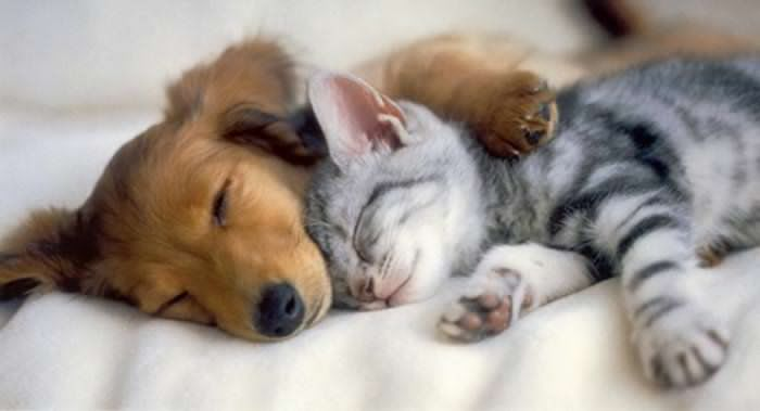 Taiwan Larang Sembelih Anjing dan Kucing untuk Konsumsi Manusia