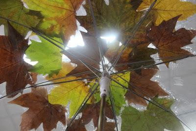 paraguas escaparate de otoño
