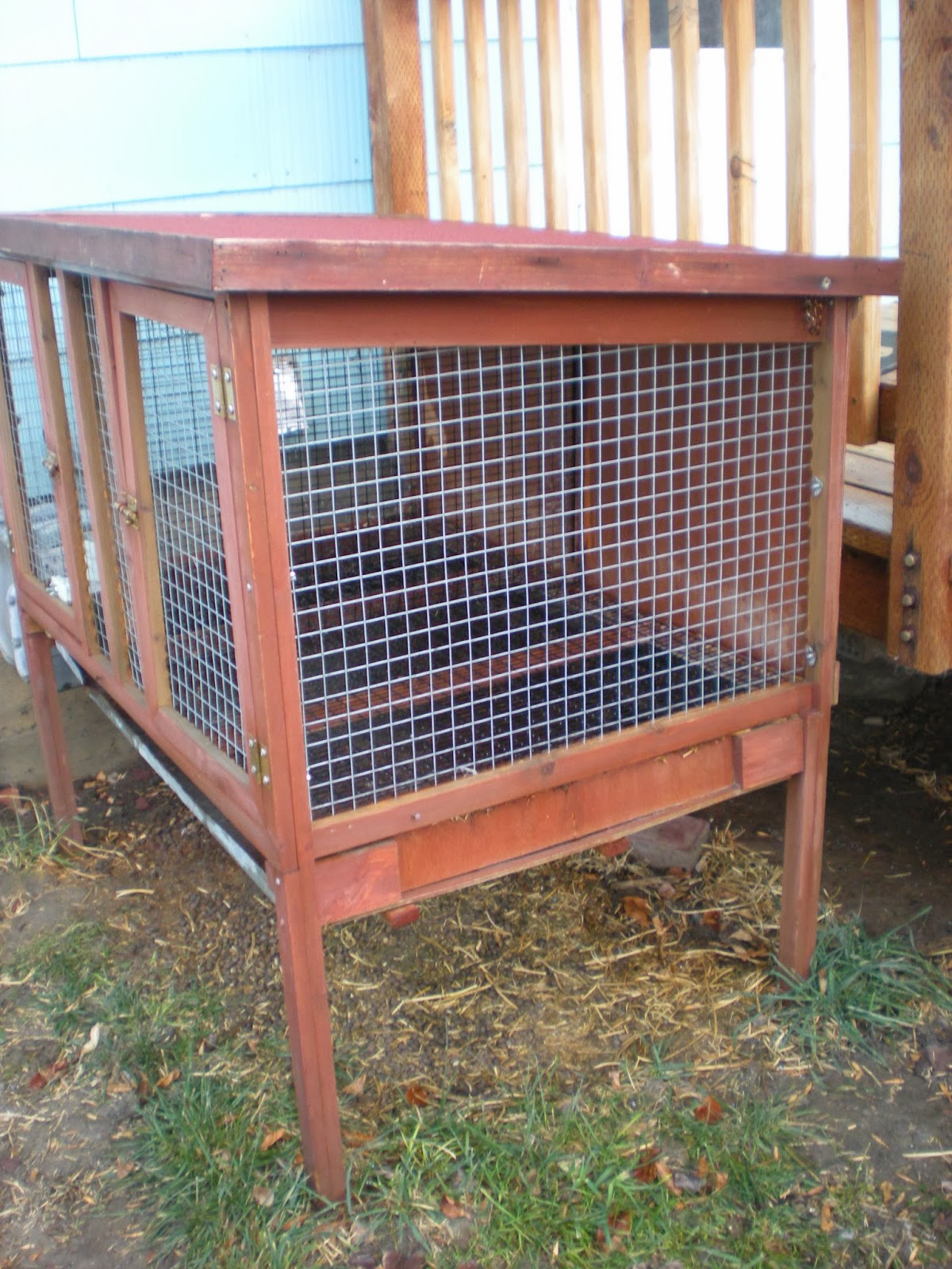 Shamrock Rabbits Rabbits Bunnies Amp Cages For Sale As Of