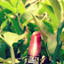 6 manfaat lipstick aloevera yang tidak mudah hilang untuk bibir