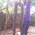 A HUGE PYTHON was Killed and Used for Pepper Soup. (The Photos will SHOCK You)