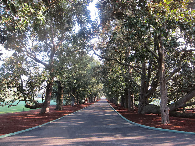 Magnolia Lane at Augusta National Golf Club