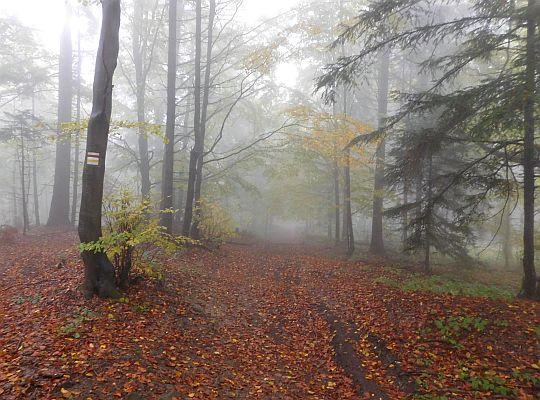 Runo leśne pokrywa już paleta kolorowych liści.