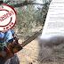 Κορινθία:«Εξαφανίζονται» ελαιόδεντρα μέσα στη νύχτα! Ένα χωριό ξεσηκώνεται!