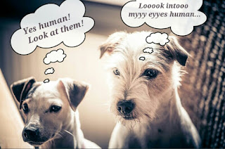 mind control dogs
