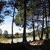 De pinos, eucaliptos y otros habitantes de las laderas