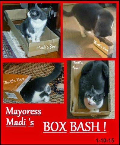 Mayoress Madi!!