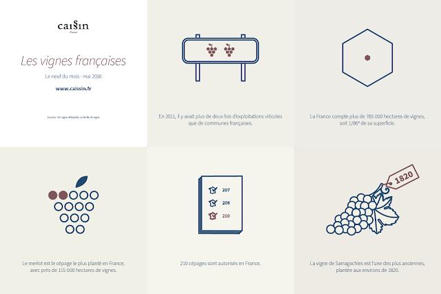 infographie sur les vignes françaises