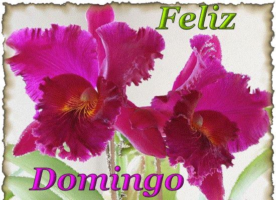flores lilas Feliz Domingo