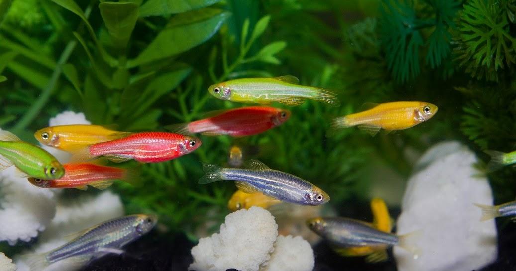 Las Gatas Madrile 241 As Glofish Vs Tk 1