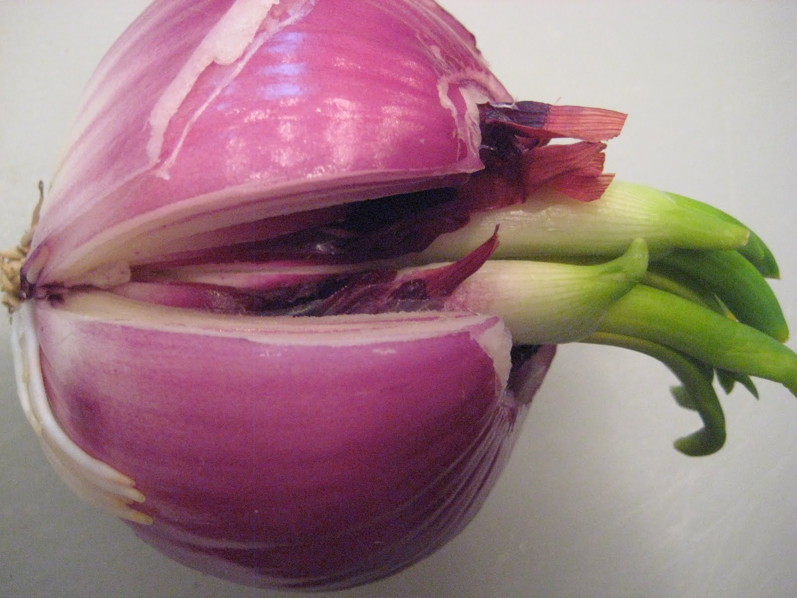 Cut Into The Onion Nearly To Center Trying Avoid Sprouting Portion