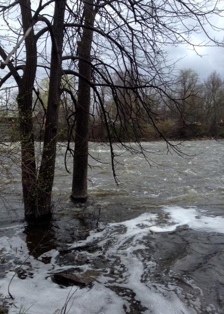 flood waters rising around trees