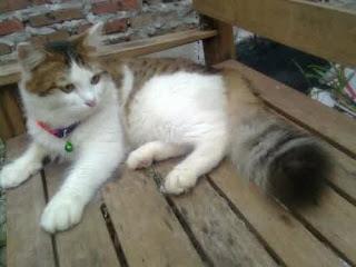 Jual Kucing anggora 3 warna jantan,  Harga Kucing anggora 3 warna jantan,  Toko Kucing anggora 3 warna jantan,  Diskon Kucing anggora 3 warna jantan,  Beli Kucing anggora 3 warna jantan,  Review Kucing anggora 3 warna jantan,  Promo Kucing anggora 3 warna jantan,  Spesifikasi Kucing anggora 3 warna jantan,  Kucing anggora 3 warna jantan Murah,  Kucing anggora 3 warna jantan Asli,  Kucing anggora 3 warna jantan Original,  Kucing anggora 3 warna jantan Jakarta,  Jenis Kucing anggora 3 warna jantan,  Budidaya Kucing anggora 3 warna jantan,  Peternak Kucing anggora 3 warna jantan,  Cara Merawat Kucing anggora 3 warna jantan,  Tips Merawat Kucing anggora 3 warna jantan,  Bagaimana cara merawat Kucing anggora 3 warna jantan,  Bagaimana mengobati Kucing anggora 3 warna jantan,  Ciri-Ciri Hamil Kucing anggora 3 warna jantan,  Kandang Kucing anggora 3 warna jantan,  Ternak Kucing anggora 3 warna jantan,  Makanan Kucing anggora 3 warna jantan,  Kucing anggora 3 warna jantan Termahal,  Adopsi Kucing anggora 3 warna jantan,  Jual Cepat Kucing anggora 3 warna jantan,