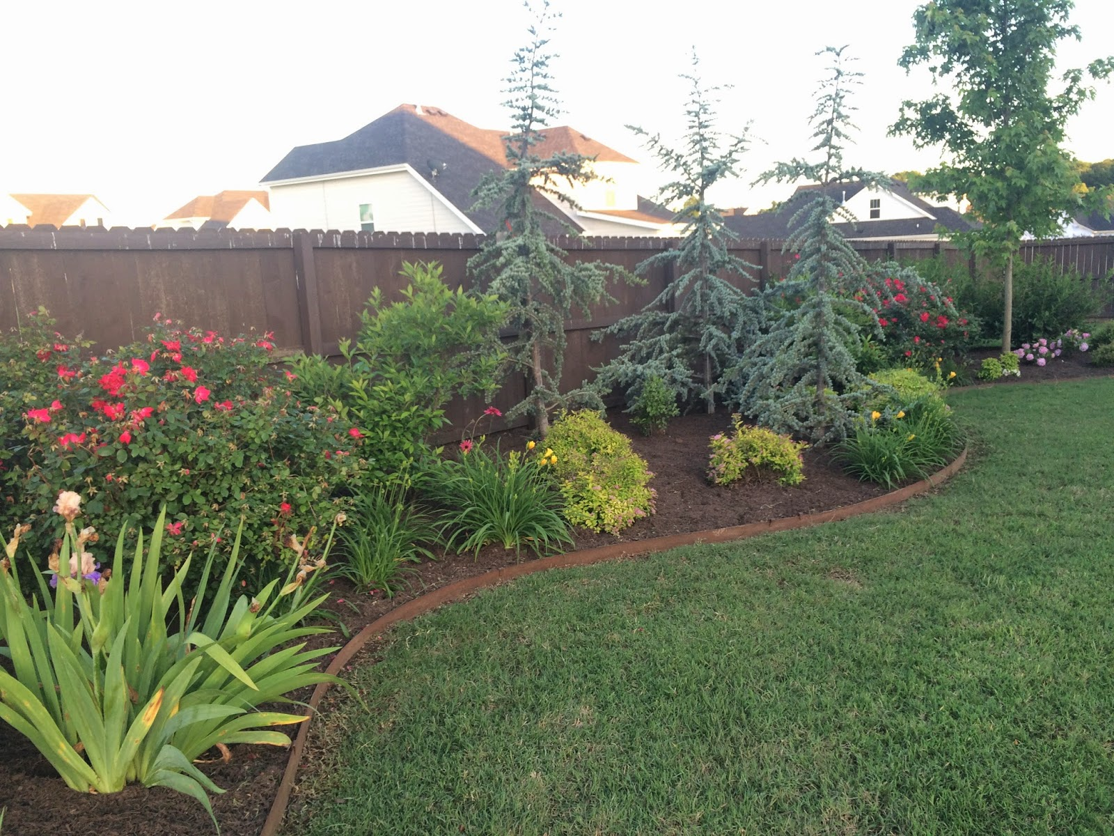 My Backyard Almost Feels Complete As Far Landscaping Goes I D Still Like To Add Some Beds Around The Sides Of House But One Step At A Time