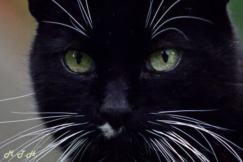 alter einer katze
