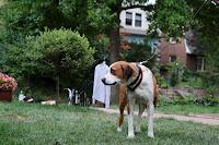 Downward Dog Series Image 4 (7)