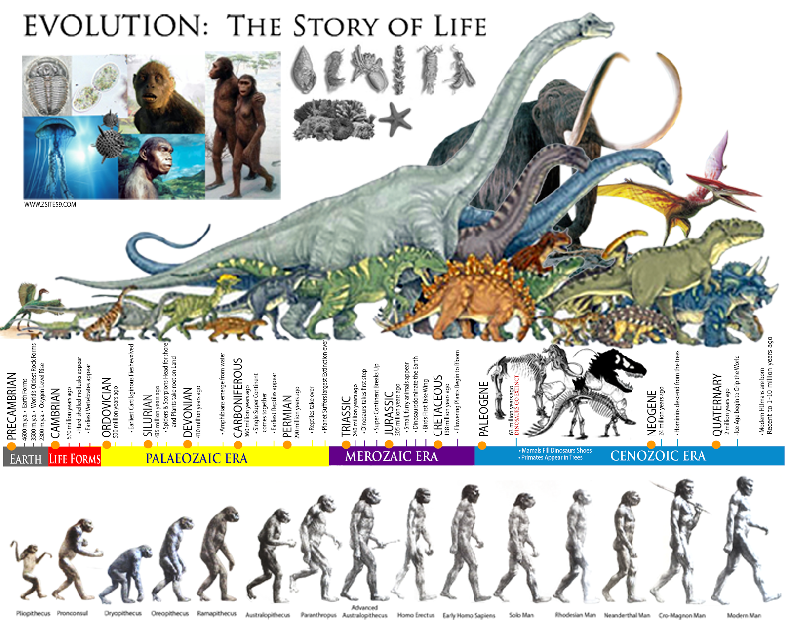 Zsite59 Faq News And Stories Evolution The Story Of Life