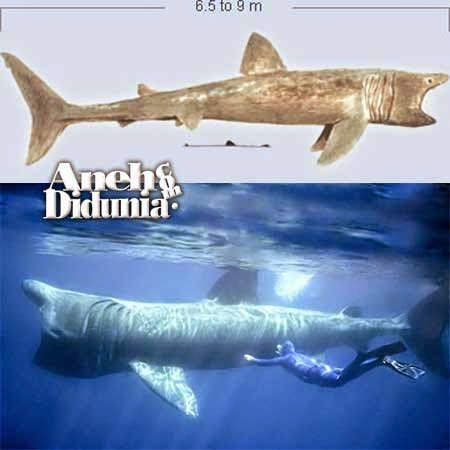 Basking Shark - 10 Jenis Ikan Hiu Terbesar Di Dunia