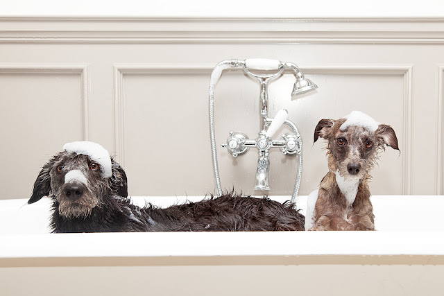 Two dogs in the bathtub_Adobe Stock